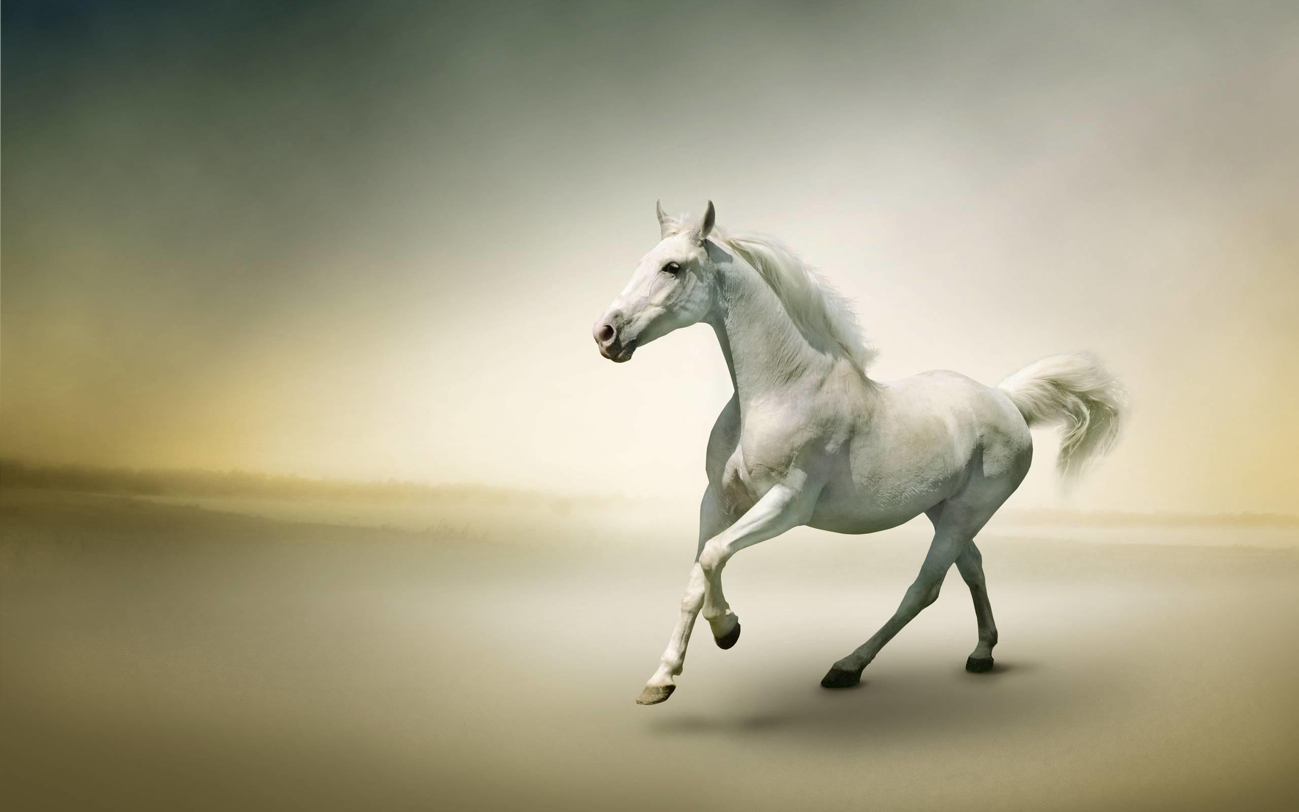 52 Beautiful Horse Desktop Wallpaper On Wallpapersafari