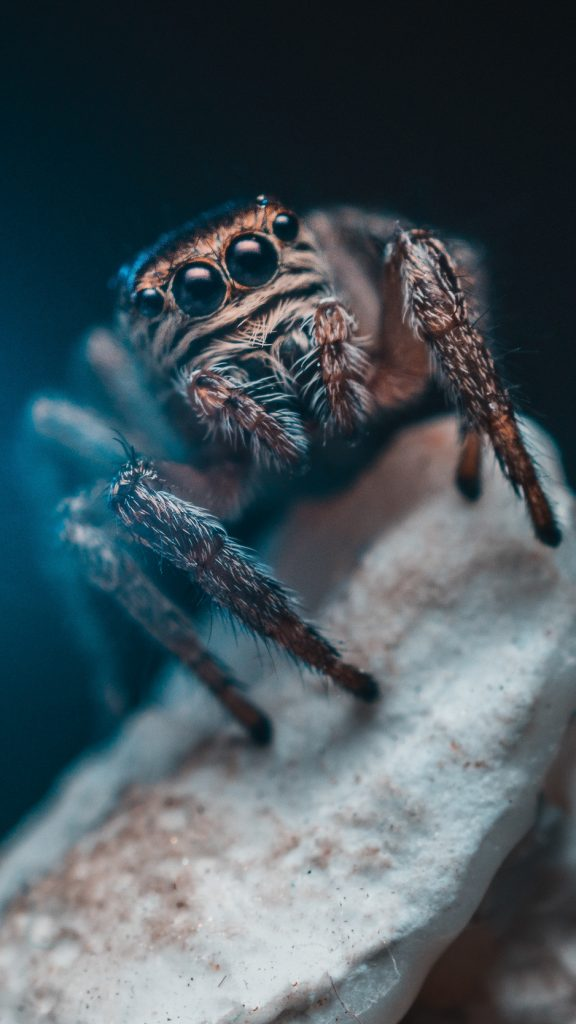 Spider eyes insect wallpaper background iphone Cool Backgrounds 576x1024