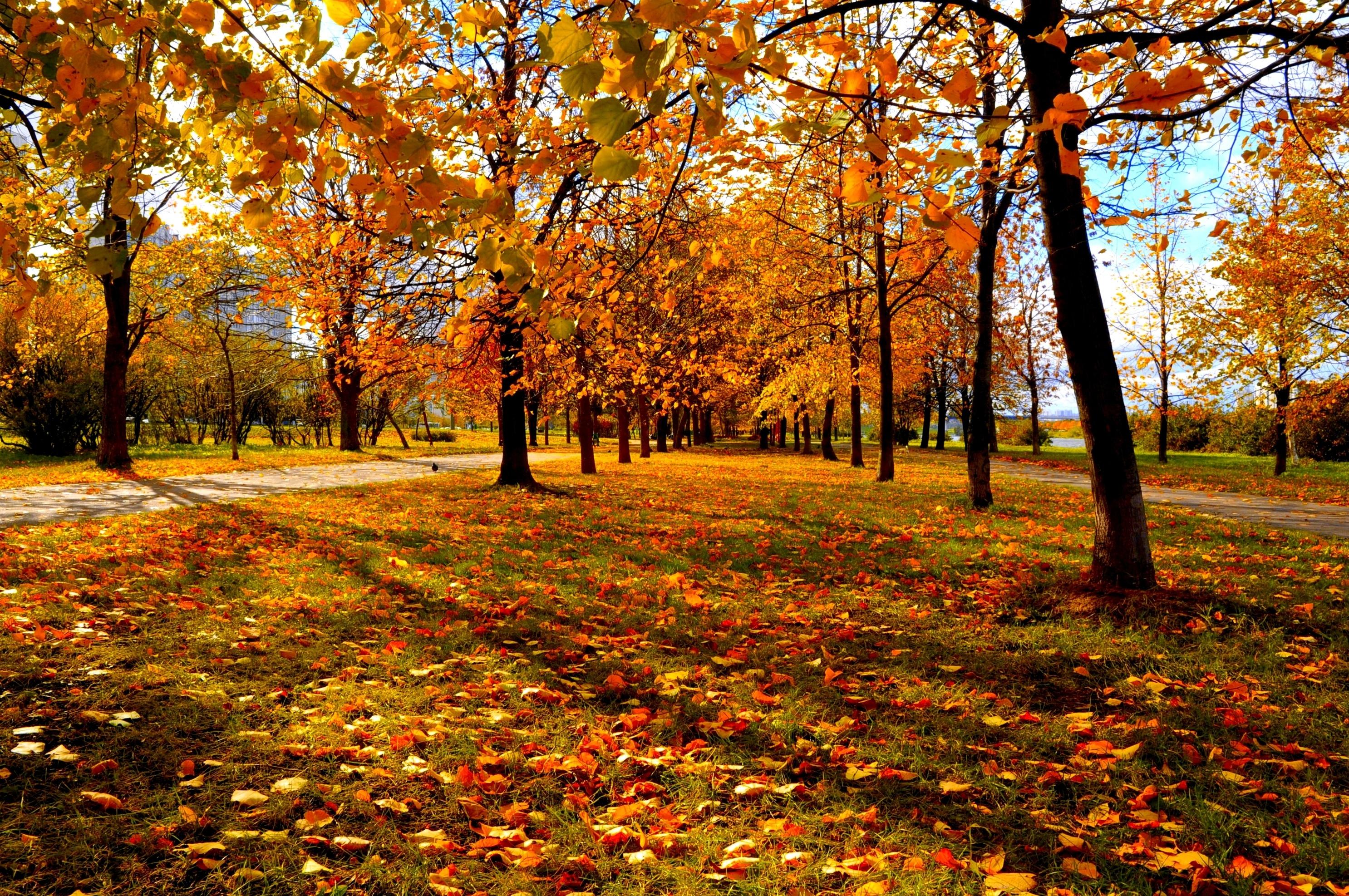 trees autumn city park wallpaper background 2972x1974