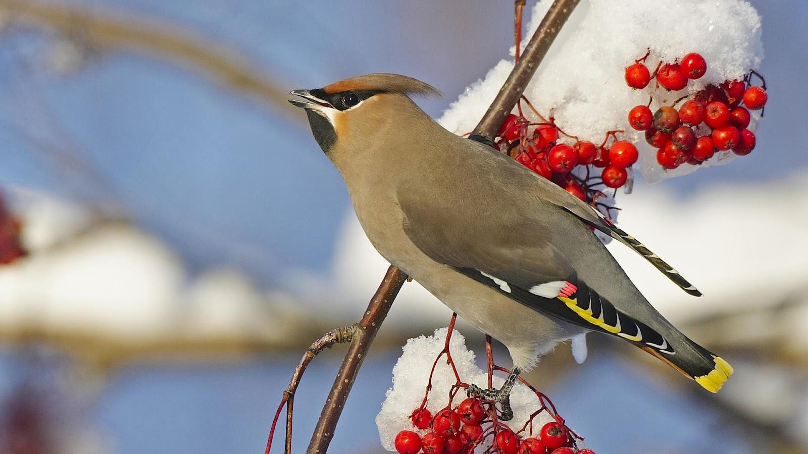 HD animal wallpaper of a bird on a branch Bird wallpaper 1600x900