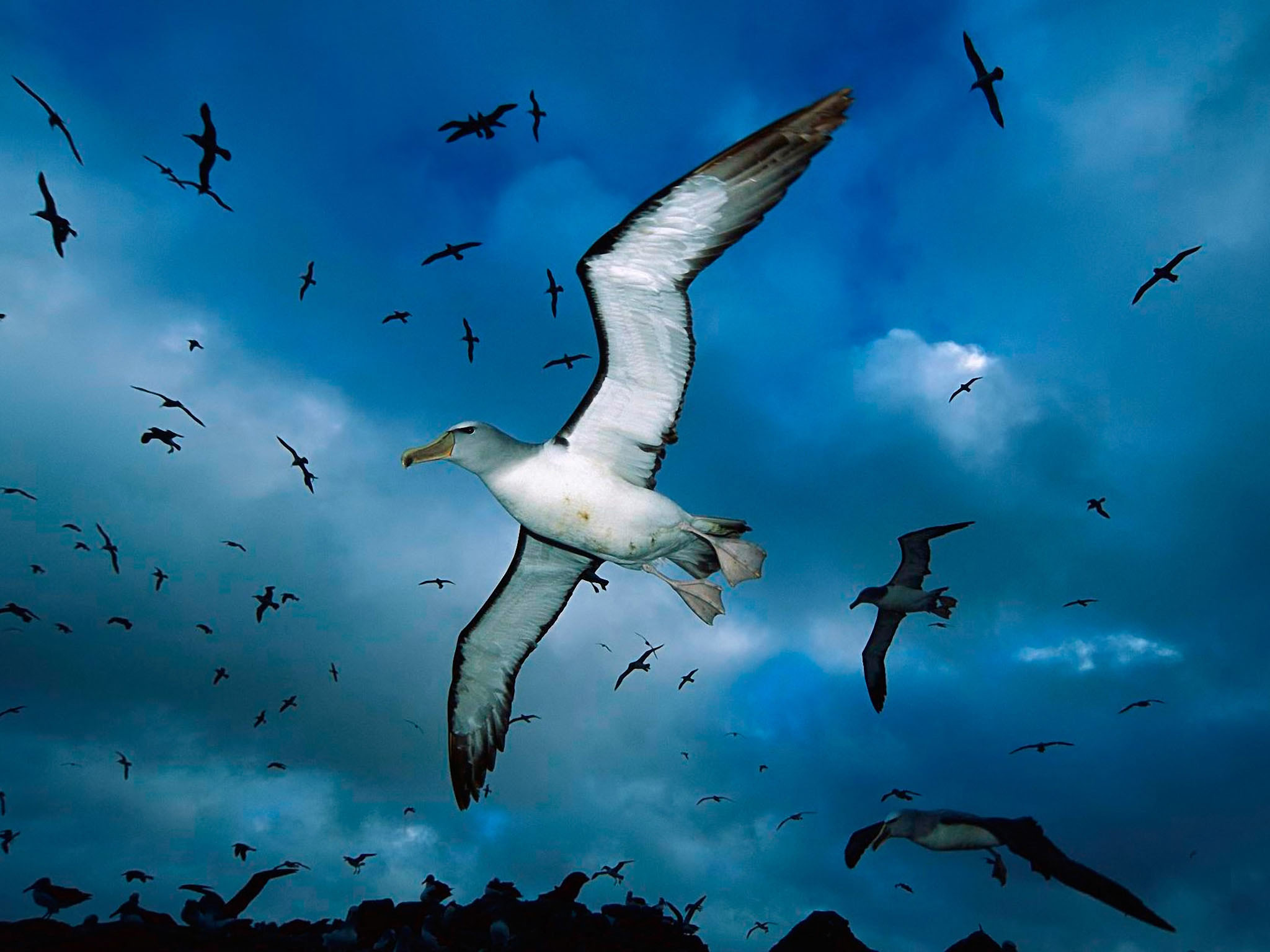 Flying Birds Apple Animals Blue Sky Wallpaper Hd Desktop 2048x1536