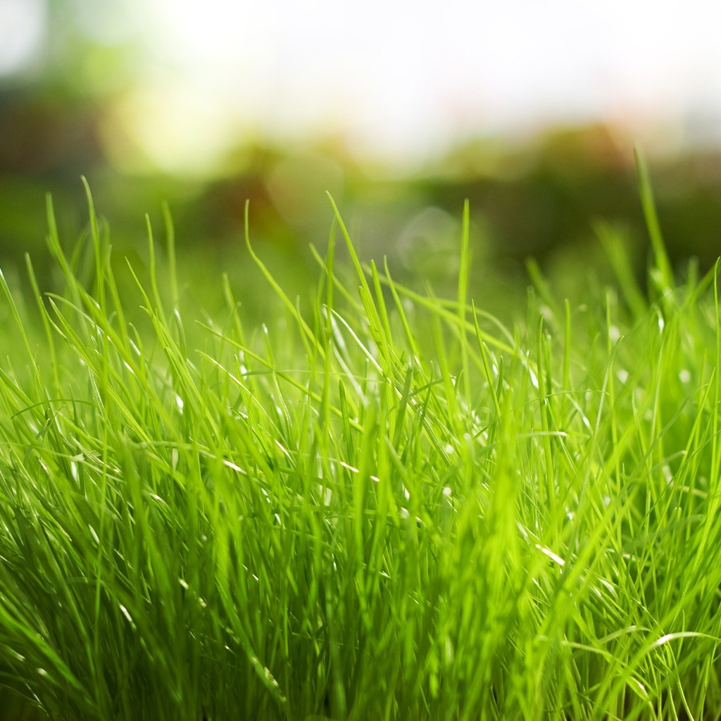 FREE Wallpapers for iPad Fresh grass Spring 1024x1024