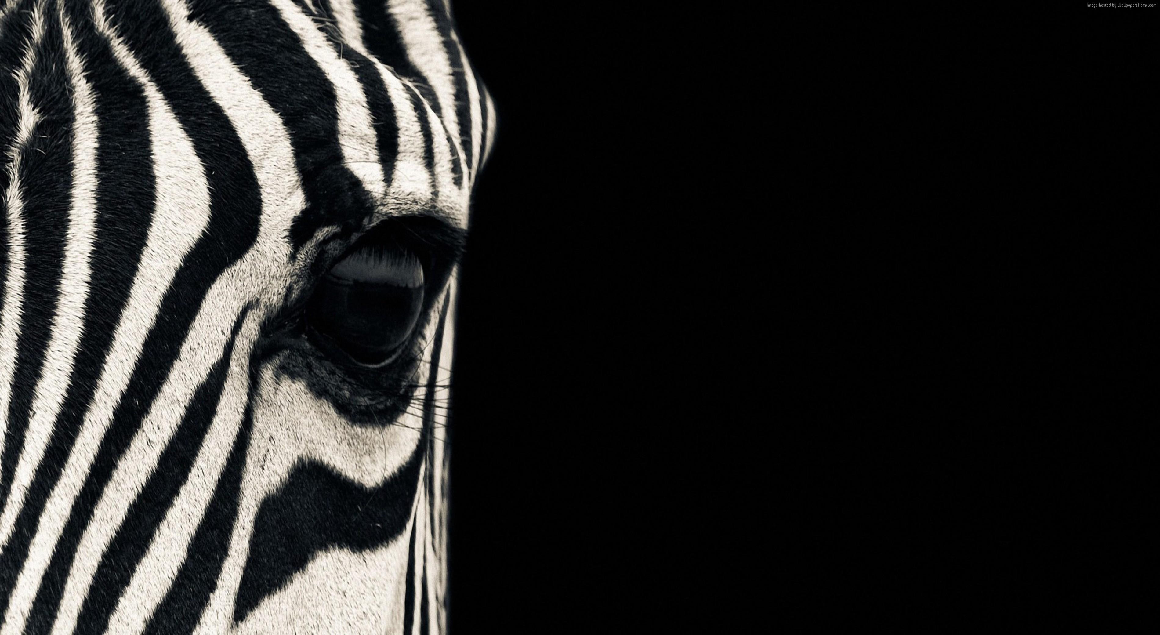 Black And White Animal Wallpaper JSC68Z7   Picseriocom 3800x2080