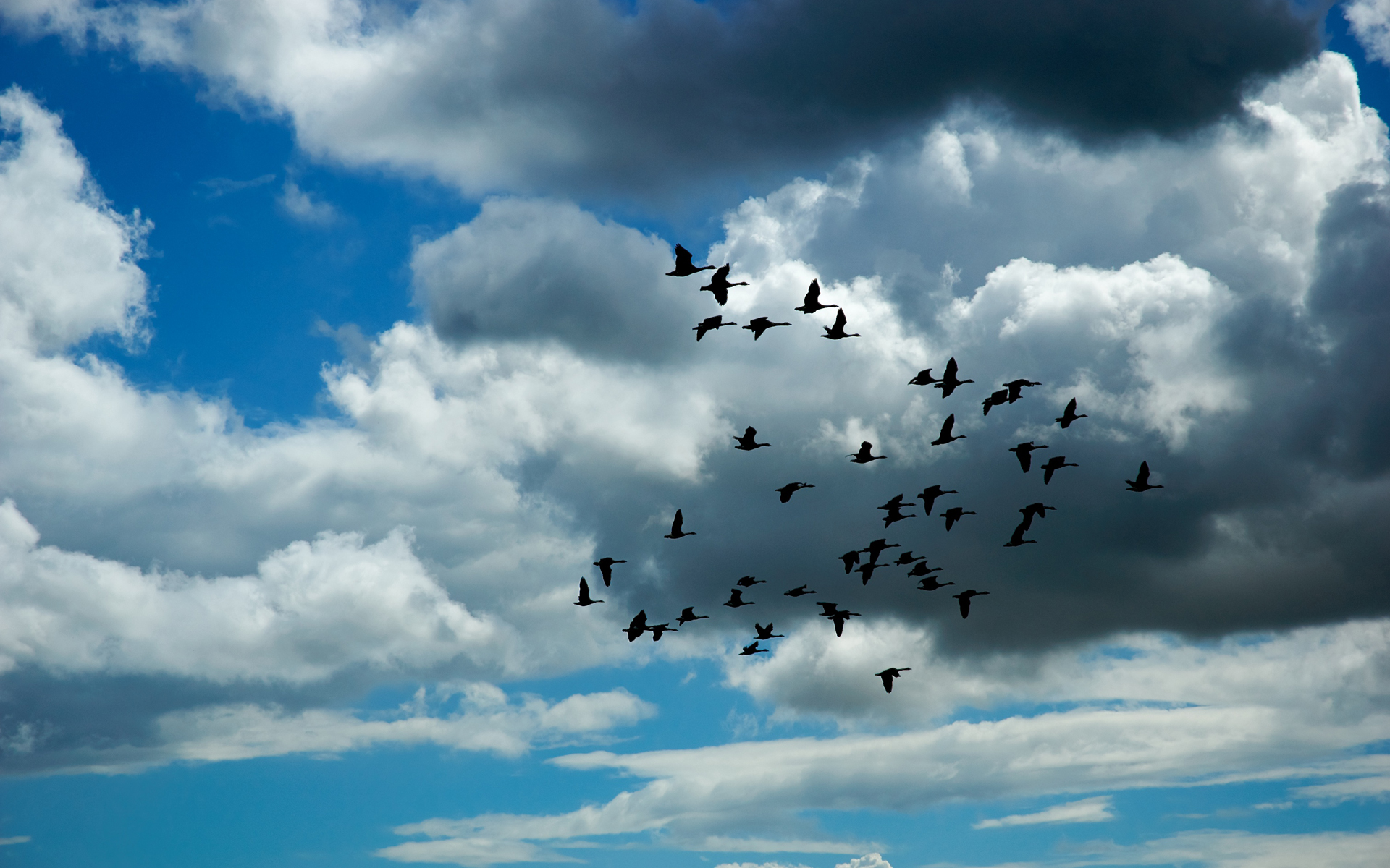 flying birds widescreen background wallpapers dan pontefract 1920x1200