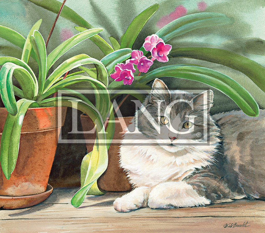 Cats in the Country 2021 Desktop Wallpaper   Calendarscom 1024x900