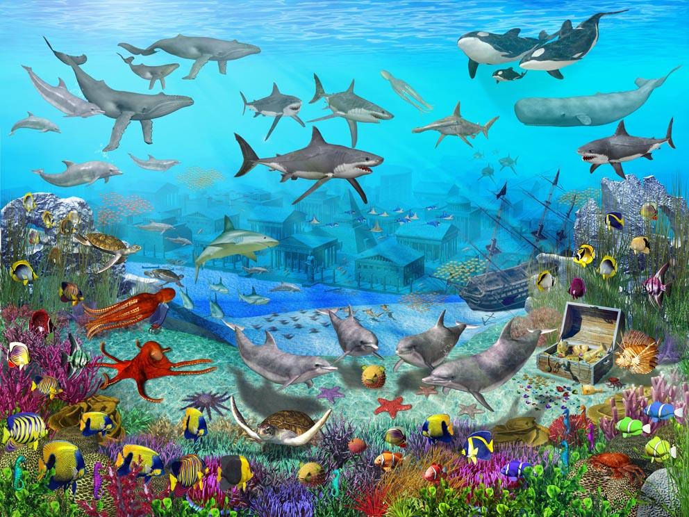 sea life wallpaper Sea and Sunset 992x744