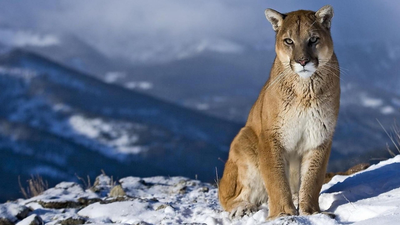 HD Animal Wallpapers 1080p - WallpaperSafari