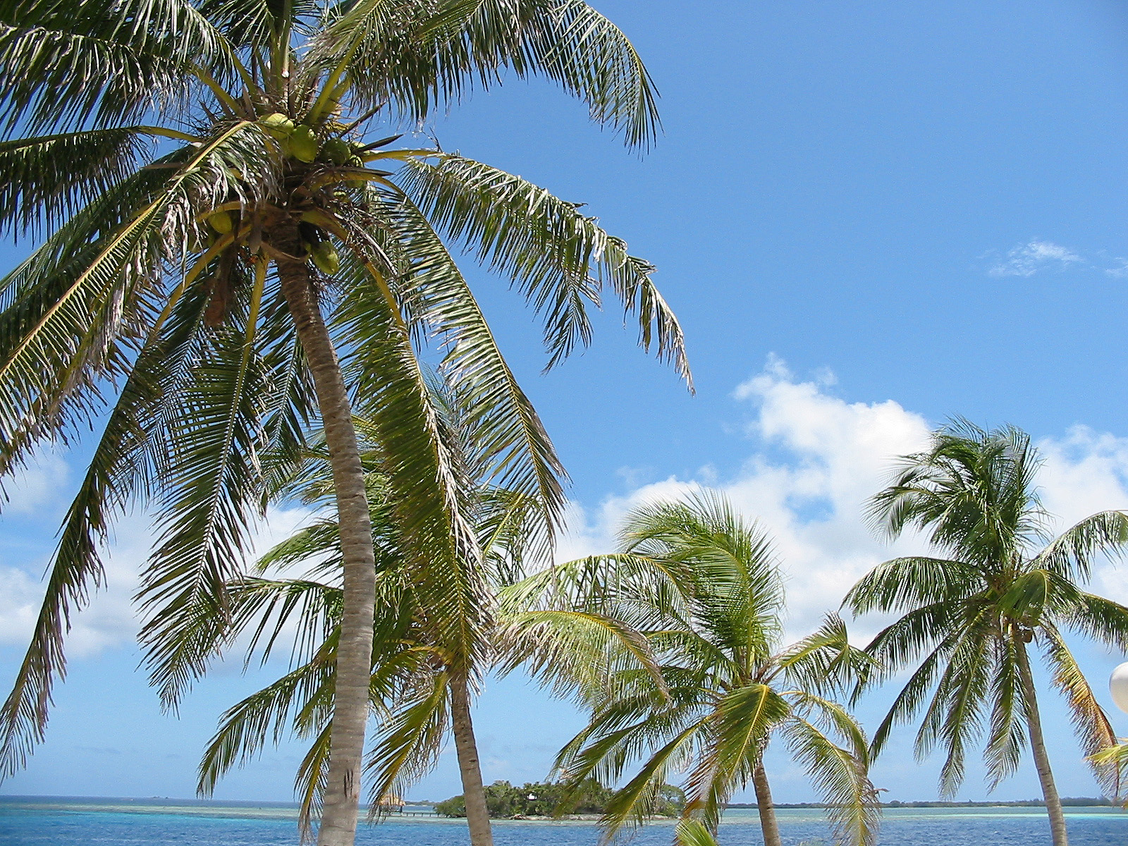 HD Wallpapers palm tree wallpapers hd 1600x1200