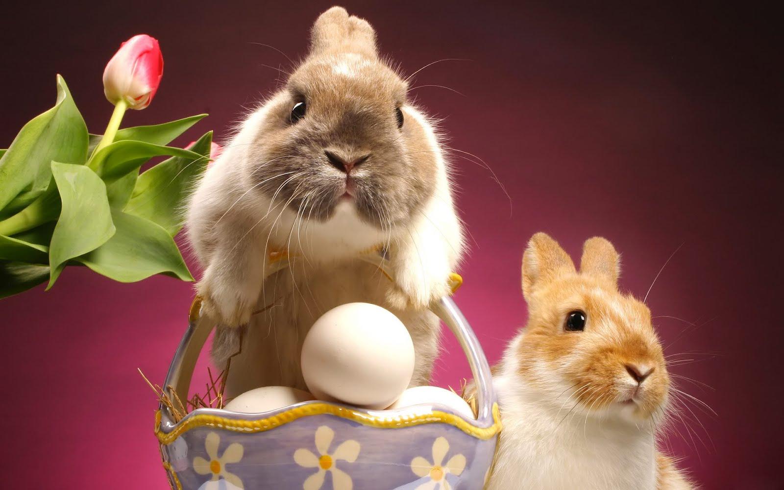 6 Cute Bunny Rabbit Easter Wallpapers for Desktop 1600x1000
