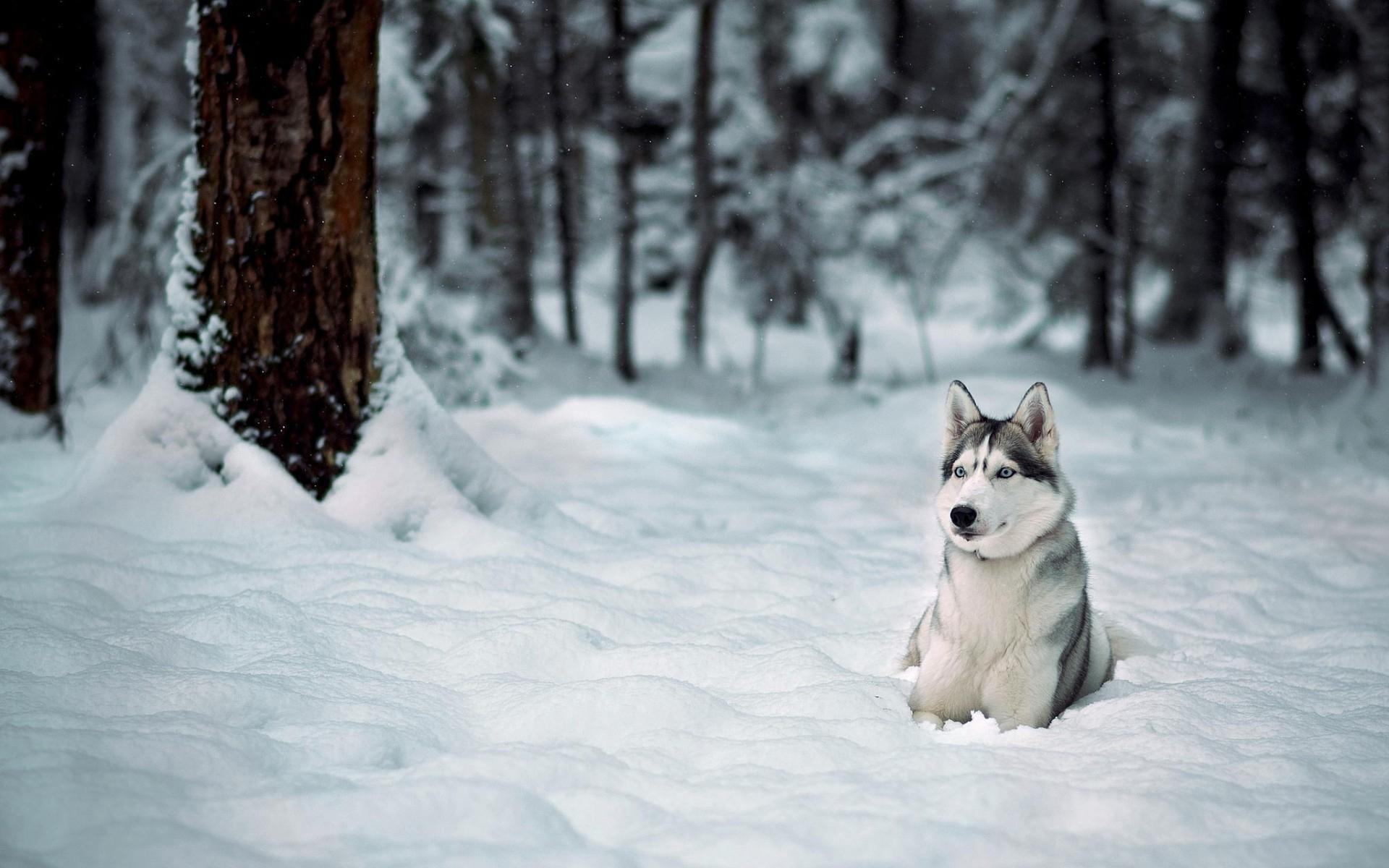 Dog White Background Free