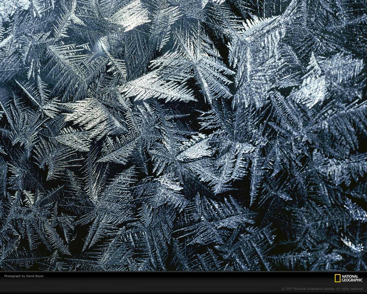 Frost Picture Frost Desktop Wallpaper Wallpapers Download 1280x1024