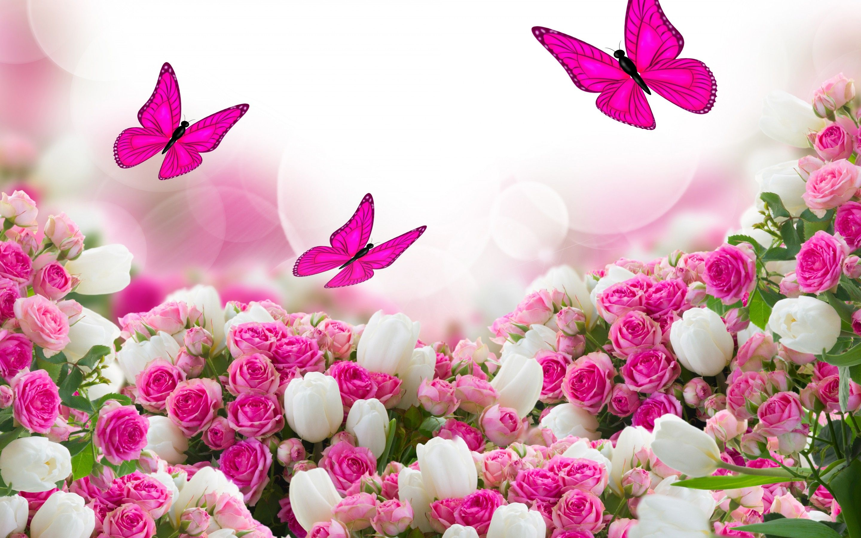 60 Pink Roses and Butterfly Wallpapers   Download at WallpaperBro 2880x1800