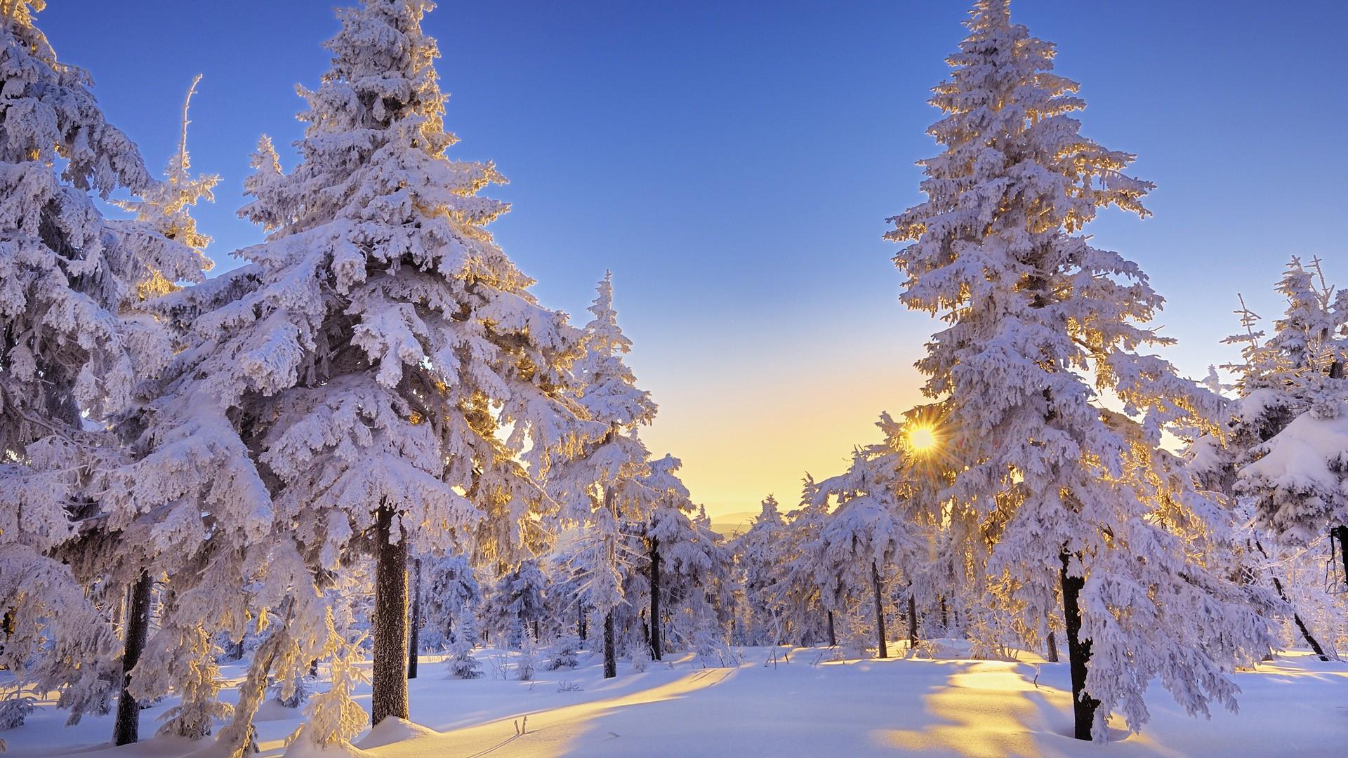 Winter Snow Wallpaper 1920x1080 Winter Snow Trees Germany 1920x1080