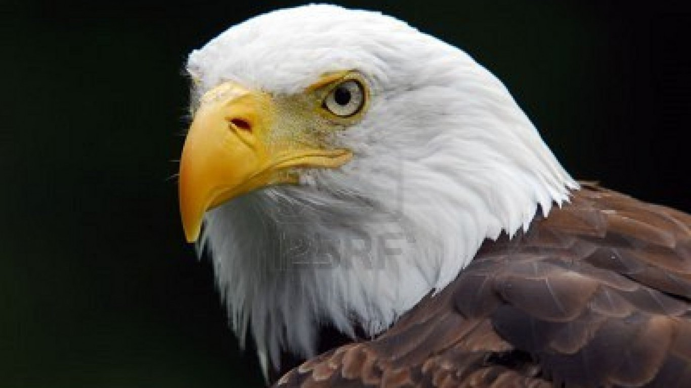 Free Download Hd American Eagle Pictures With Flag Hd American