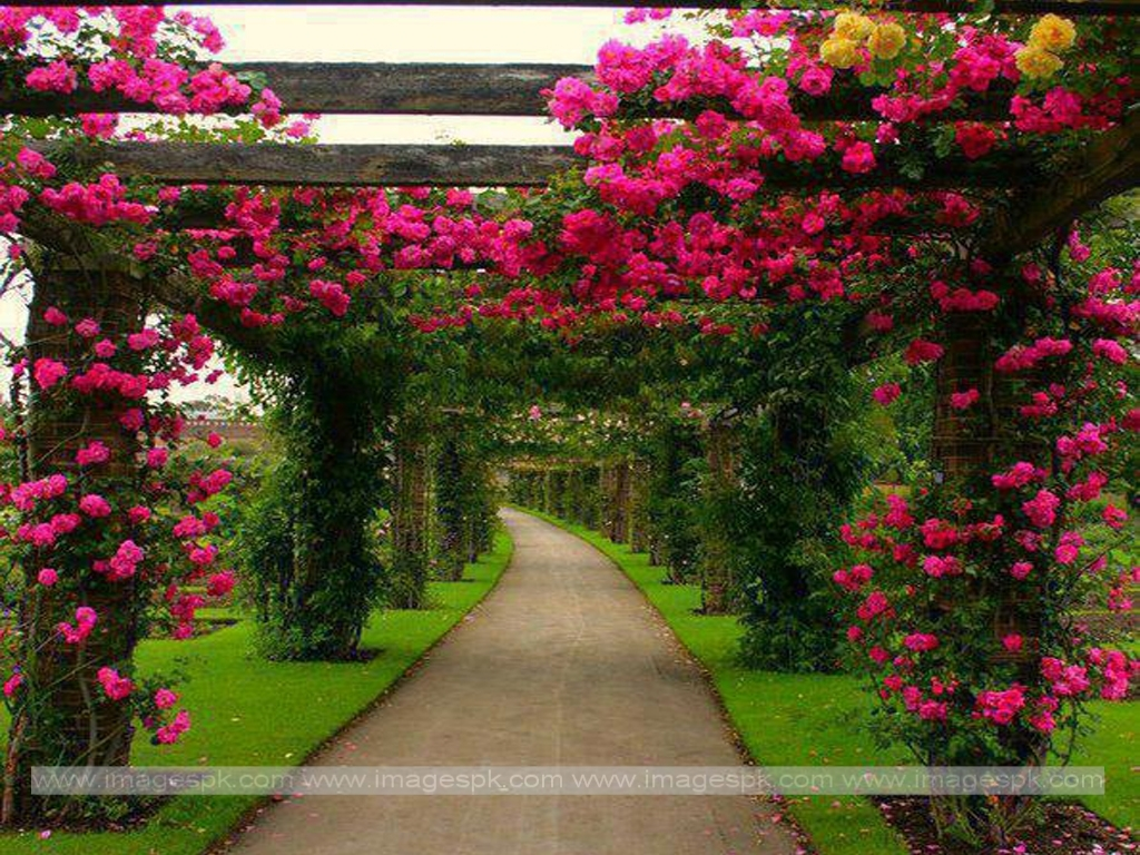 Beautiful pictures of flower gardens for Beautiful flower landscapes