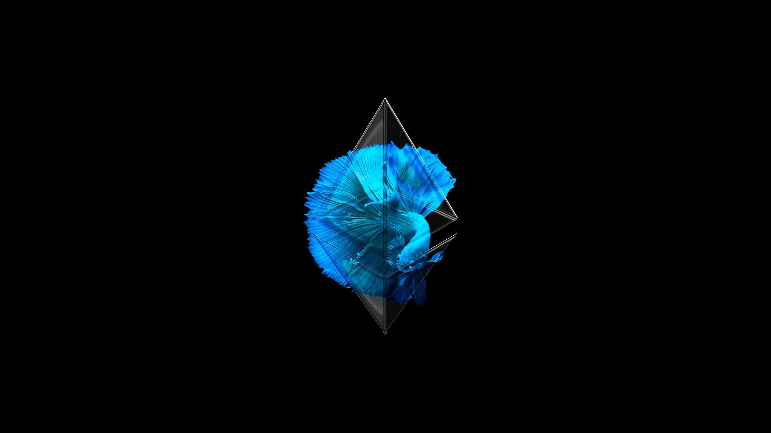 Ethereum Wallpapers 2560x1440