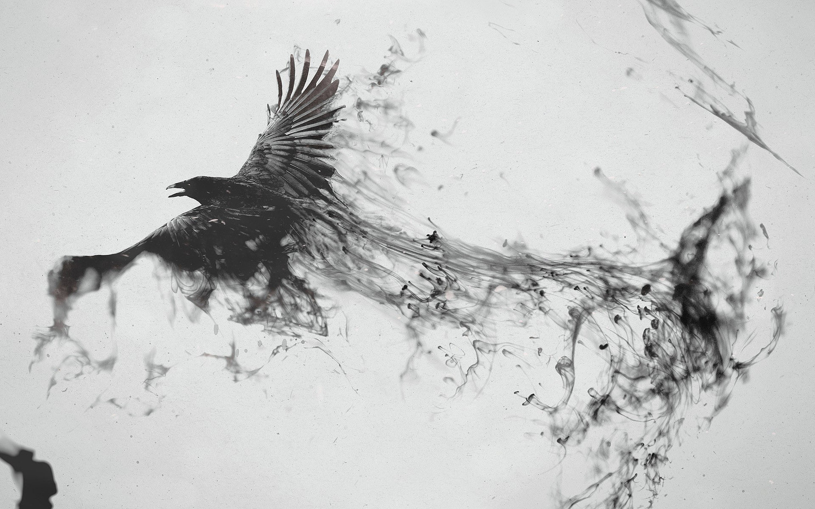 Download Crow turning into smoke wallpaper 1680x1050