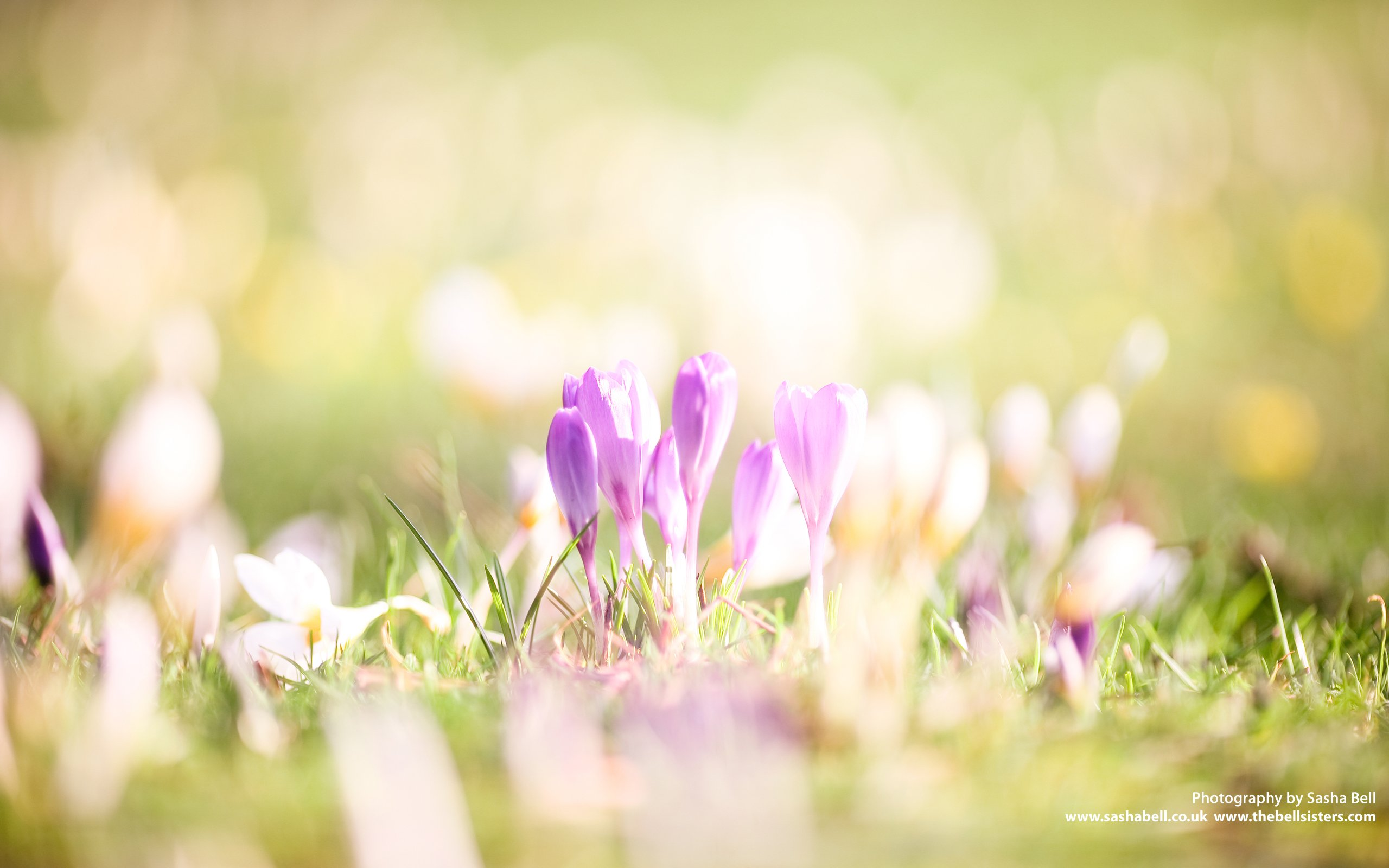 Early Spring   March Wallpaper Flickr   Photo Sharing 2560x1600