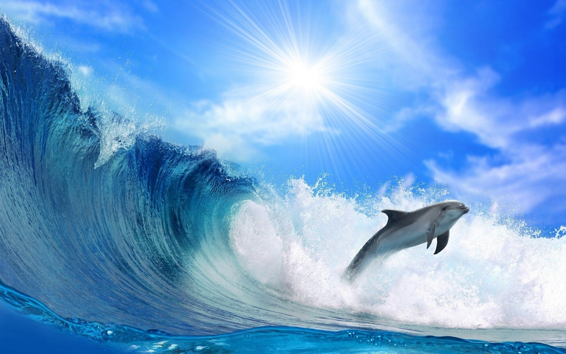 Dolphin Wallpapers HD 1920x1200