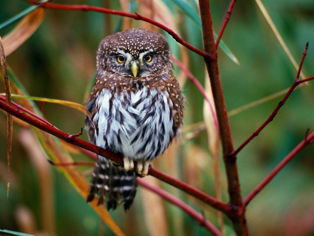 High Resolution Owl Wallpaper - WallpaperSafari