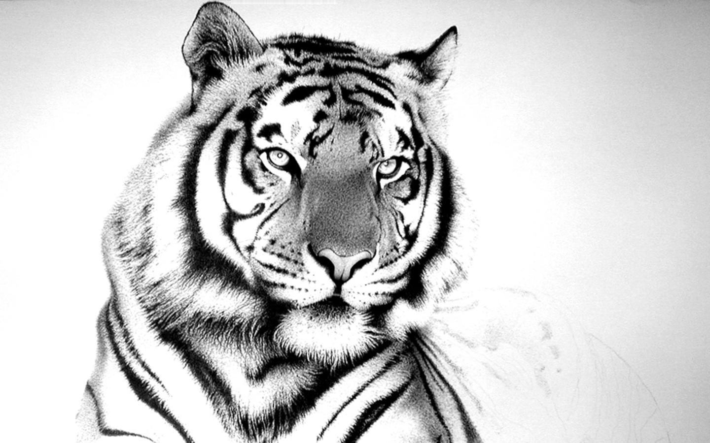 White Tiger Wallpaper 1440x900 pixel Popular HD Wallpaper 5552 1440x900