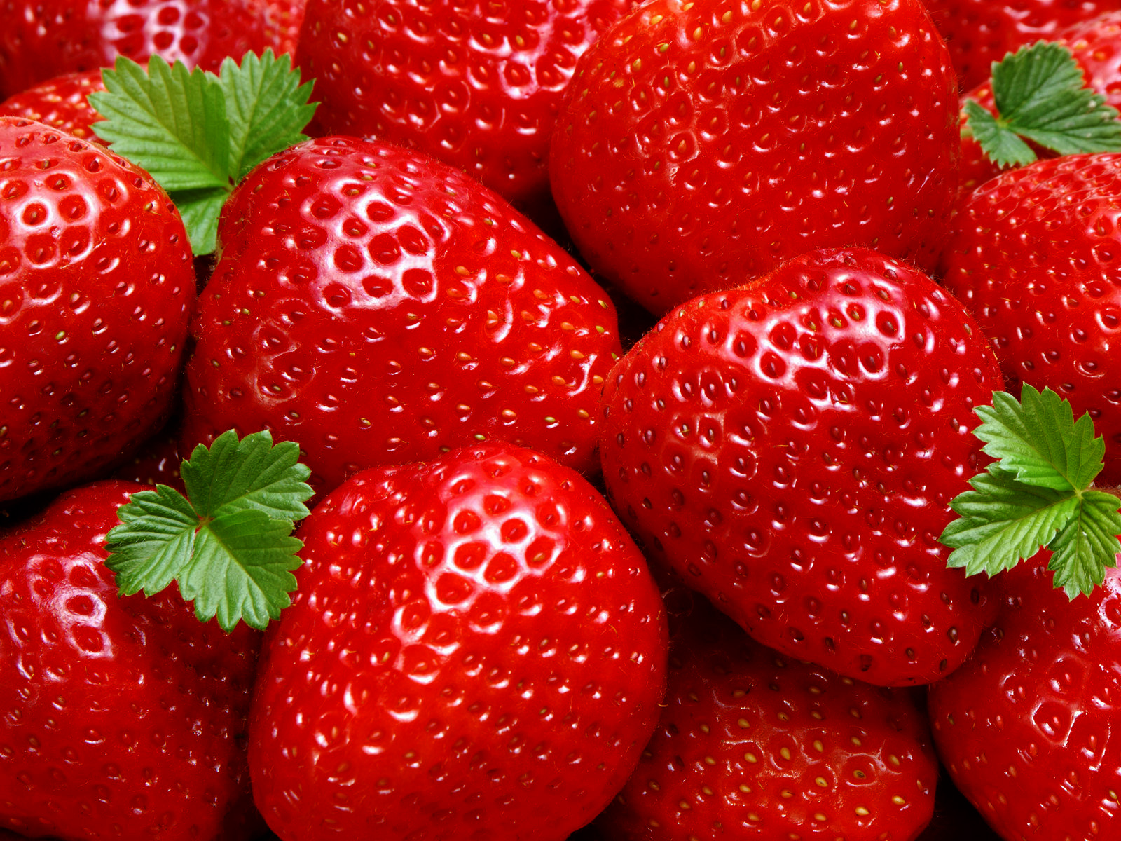 Fresh Strawberries Photography HD Wallpapers Desktop Wallpaper 1600x1200