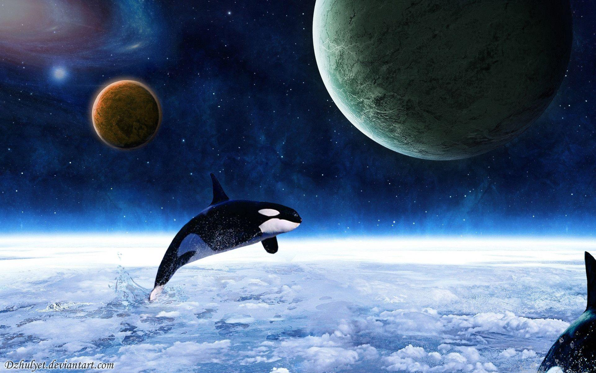 Killer Whales Wallpapers 1920x1200