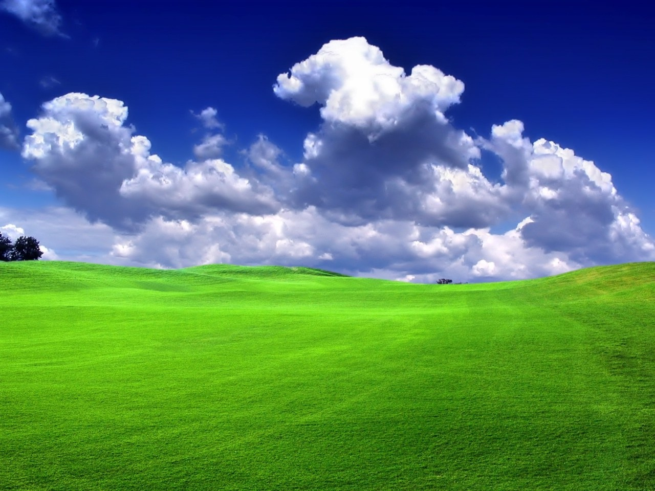Free Download Green Grass Windows Xp Green Wallpapers Download