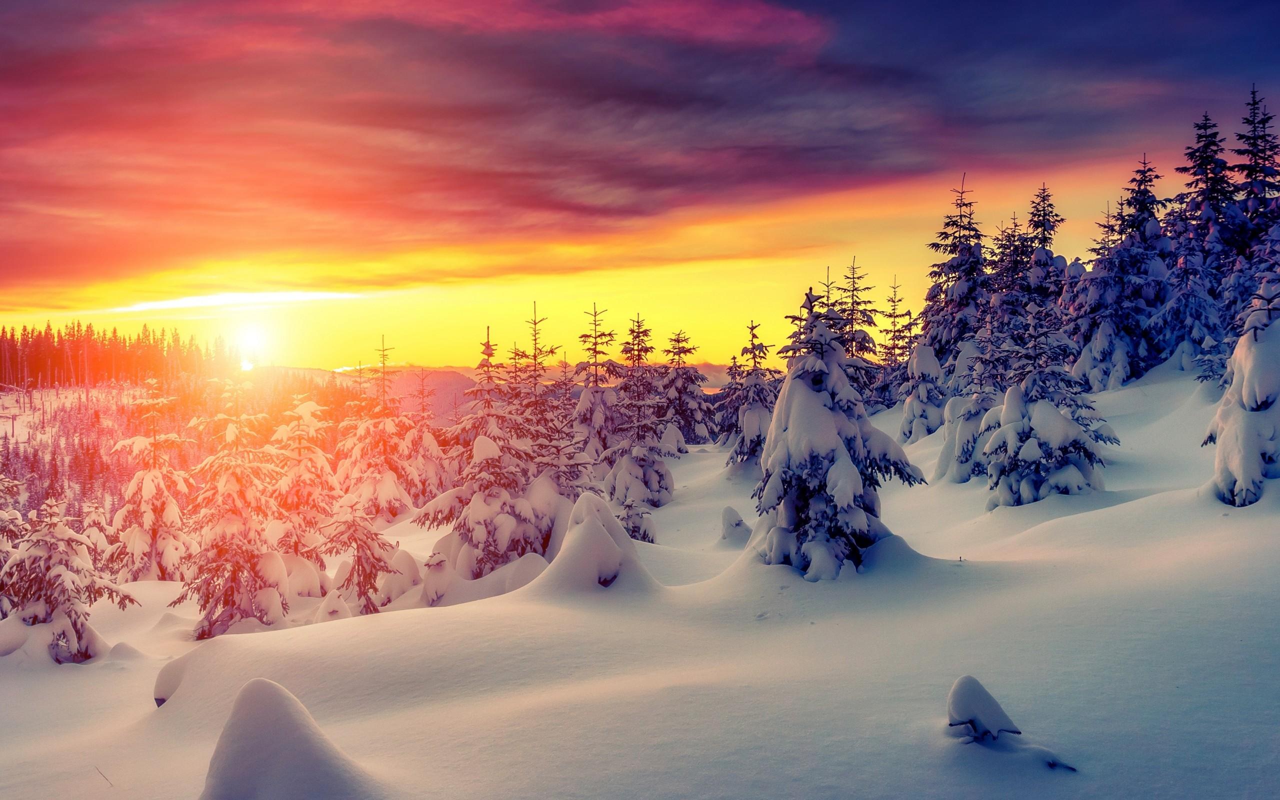 Winter sunset with snow 4K Ultra HD wallpaper 4k WallpaperNet 2560x1600