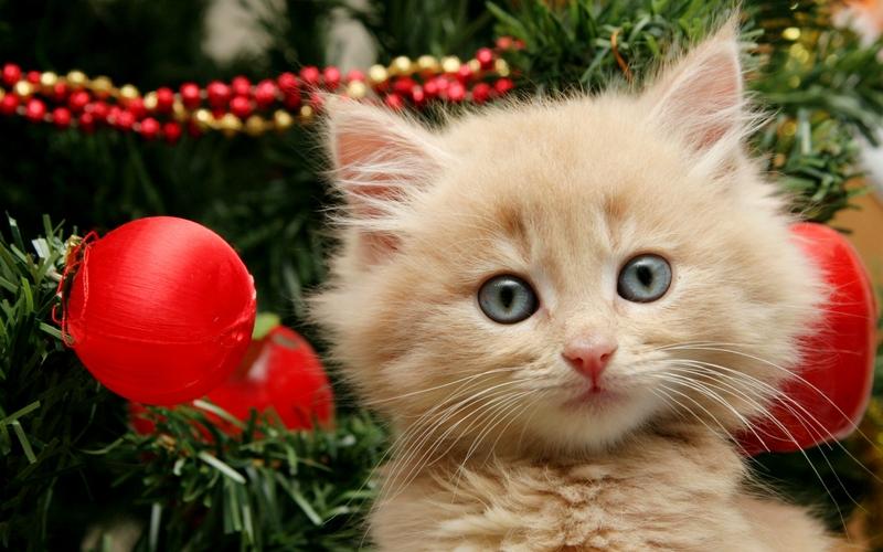 cats cats animals christmas kittens christmas tree 2560x1600 wallpaper 800x500