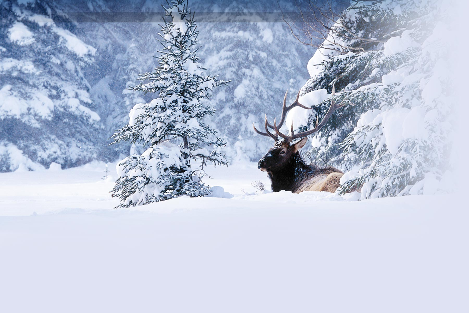 Ipad Hd Wallpaper Nature: Beautiful Winter Wallpapers For IPads