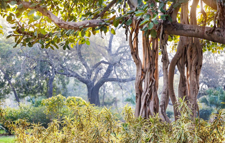 Wallpaper nature blur India summer landscape nature bokeh 1332x850