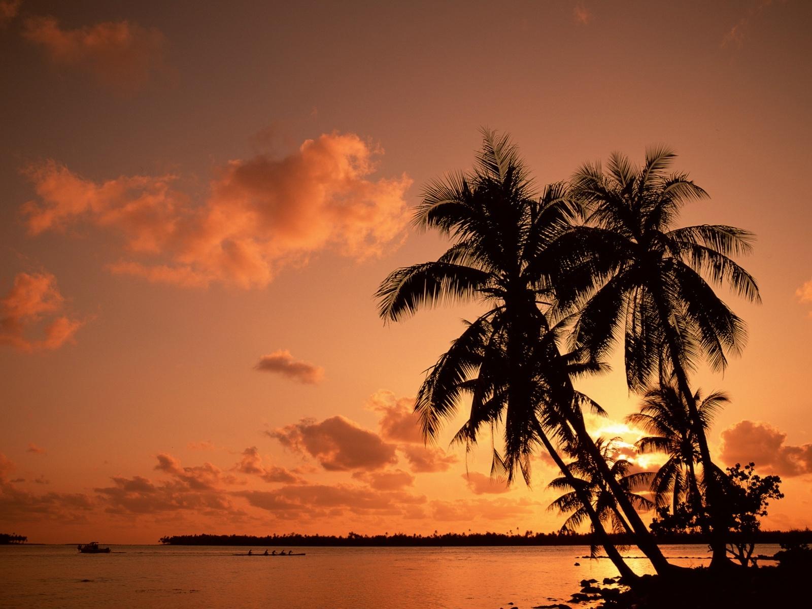 Palm Tree Pictures 865580 Palm Tree Pictures 865589 Palm Tree 1600x1200