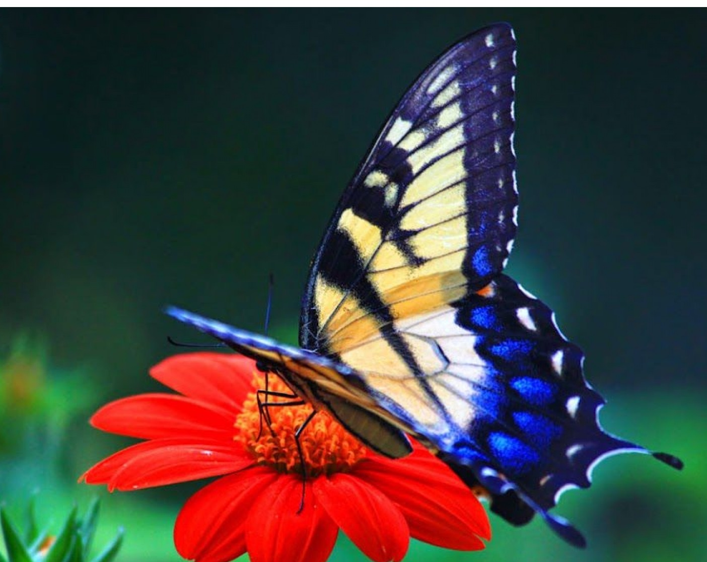 55 Colorful ButterflyHD Images Wallpapers Download 1404x1116