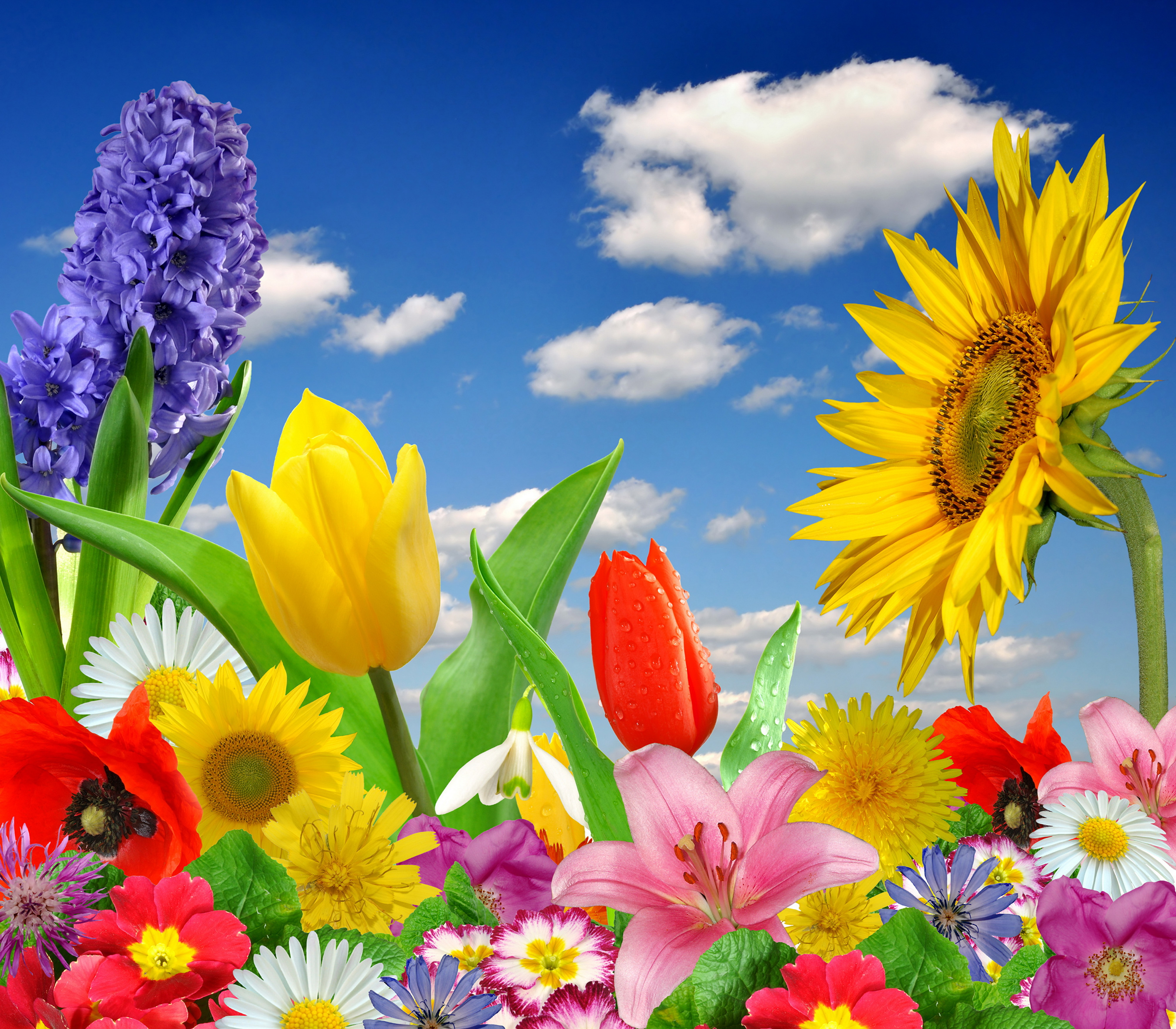Spring Pictures: [31+] Spring Colorful Wallpapers On WallpaperSafari