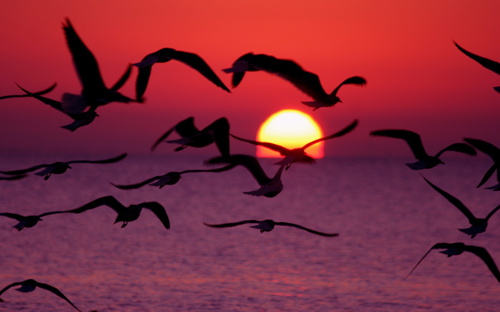 Beautiful Birds Flying Mobile wallpapers 1600x1000