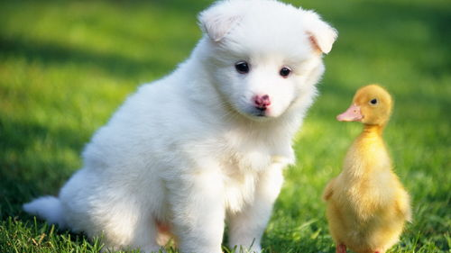 animals cute dogs nature puppy 500x281