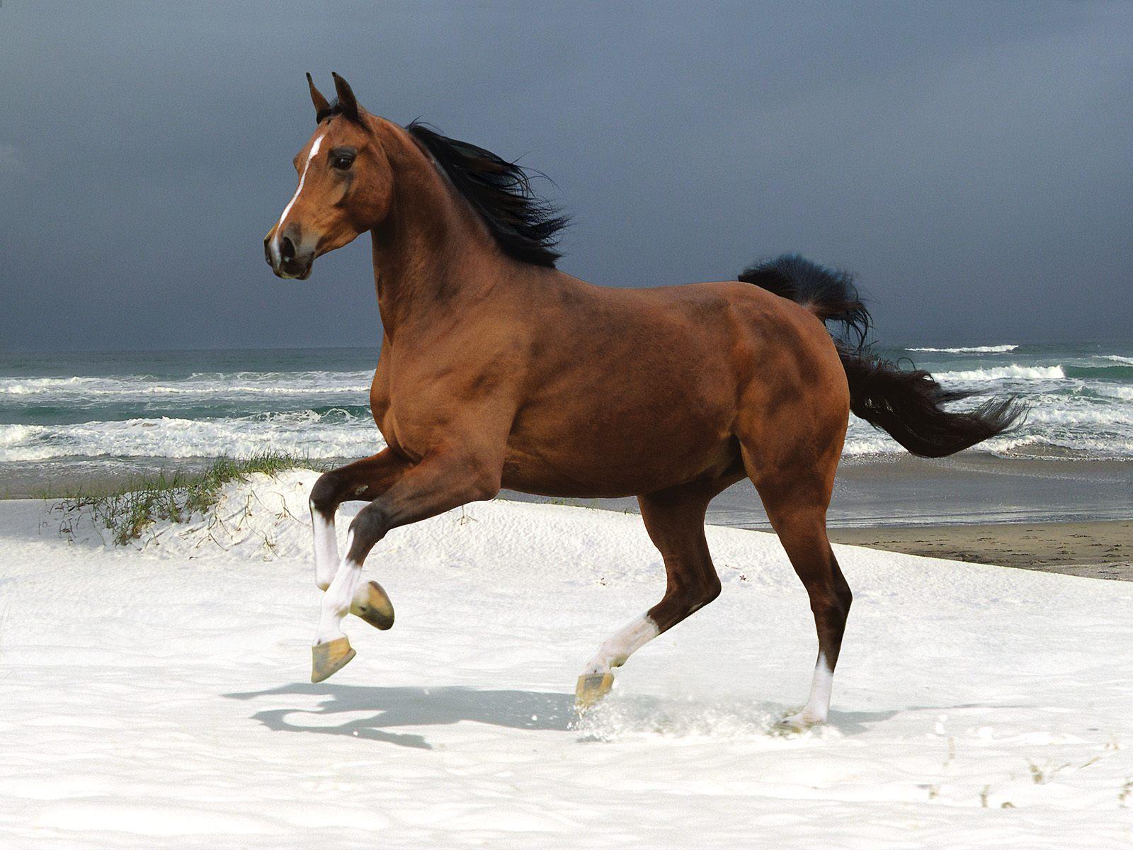 Horses in the water desktop wallpaper 1600x1200