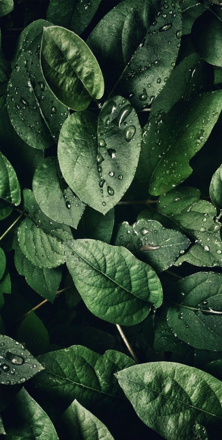 Tropical Leaves Botanicals Leaf Phone Wallpaper   Idea 757x1497
