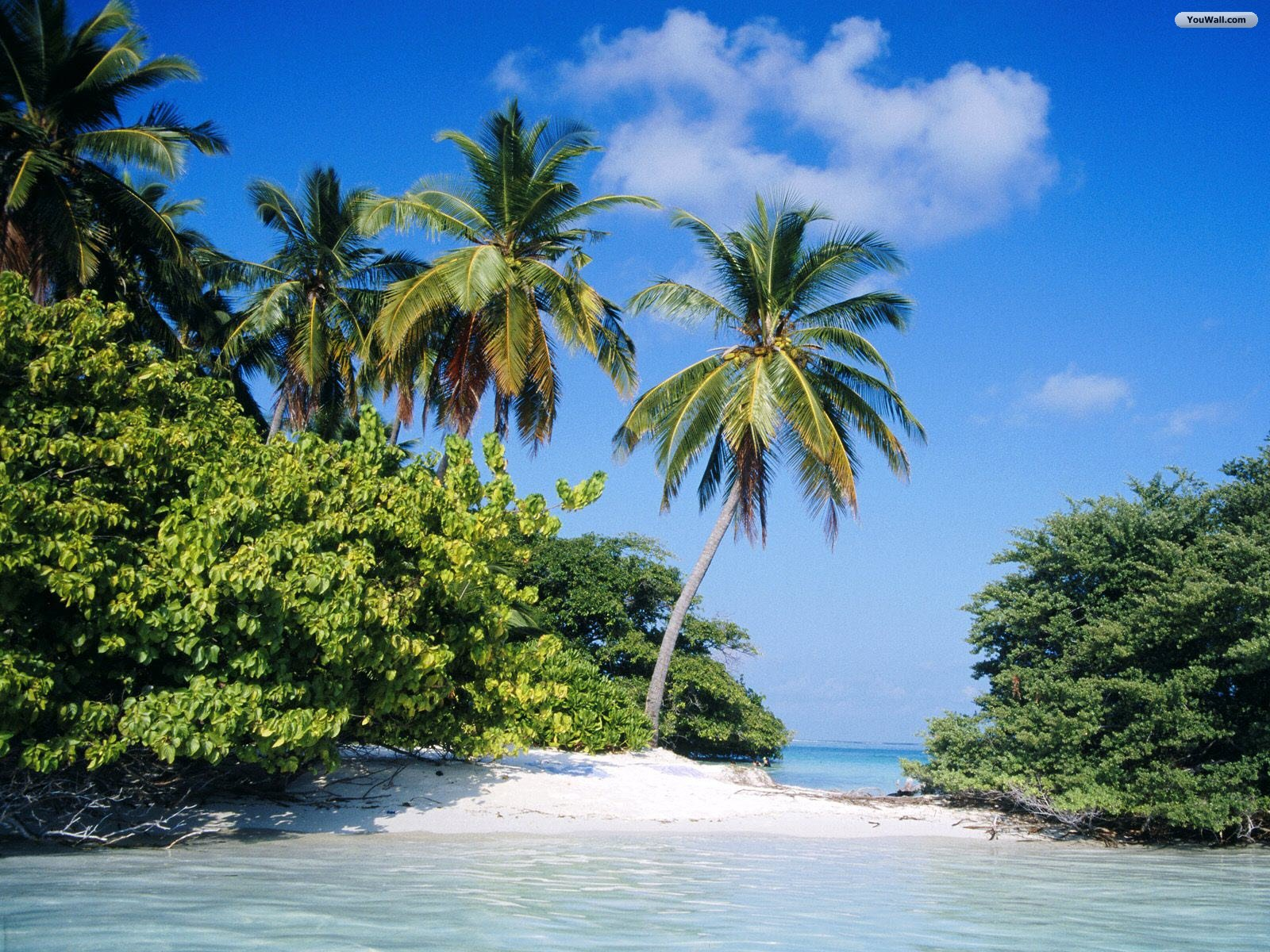 Tropical Island Wallpaper   wallpaperwallpapersfree wallpaper 1600x1200