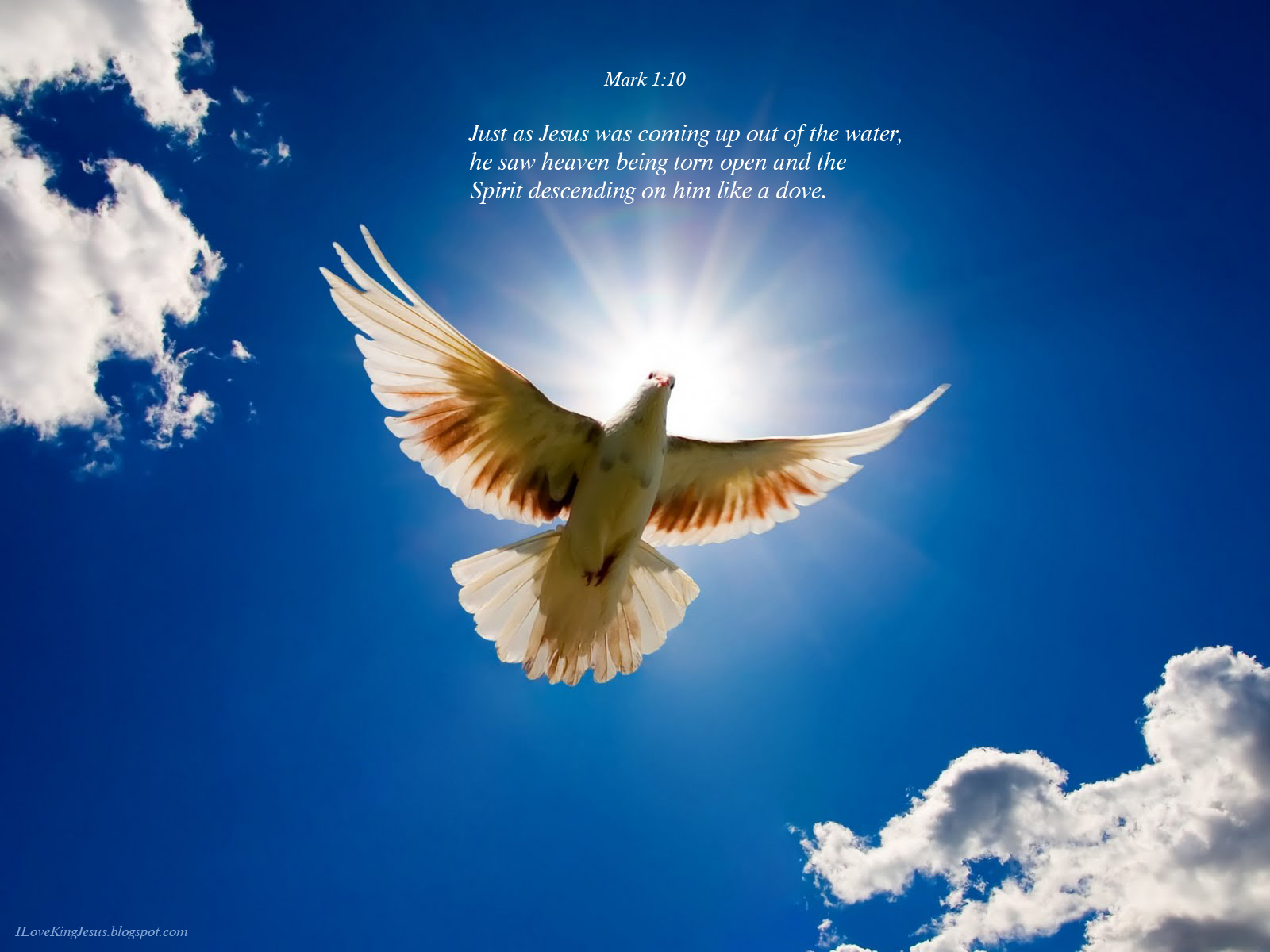dove bird christian wallpaperjpg 1600x1200