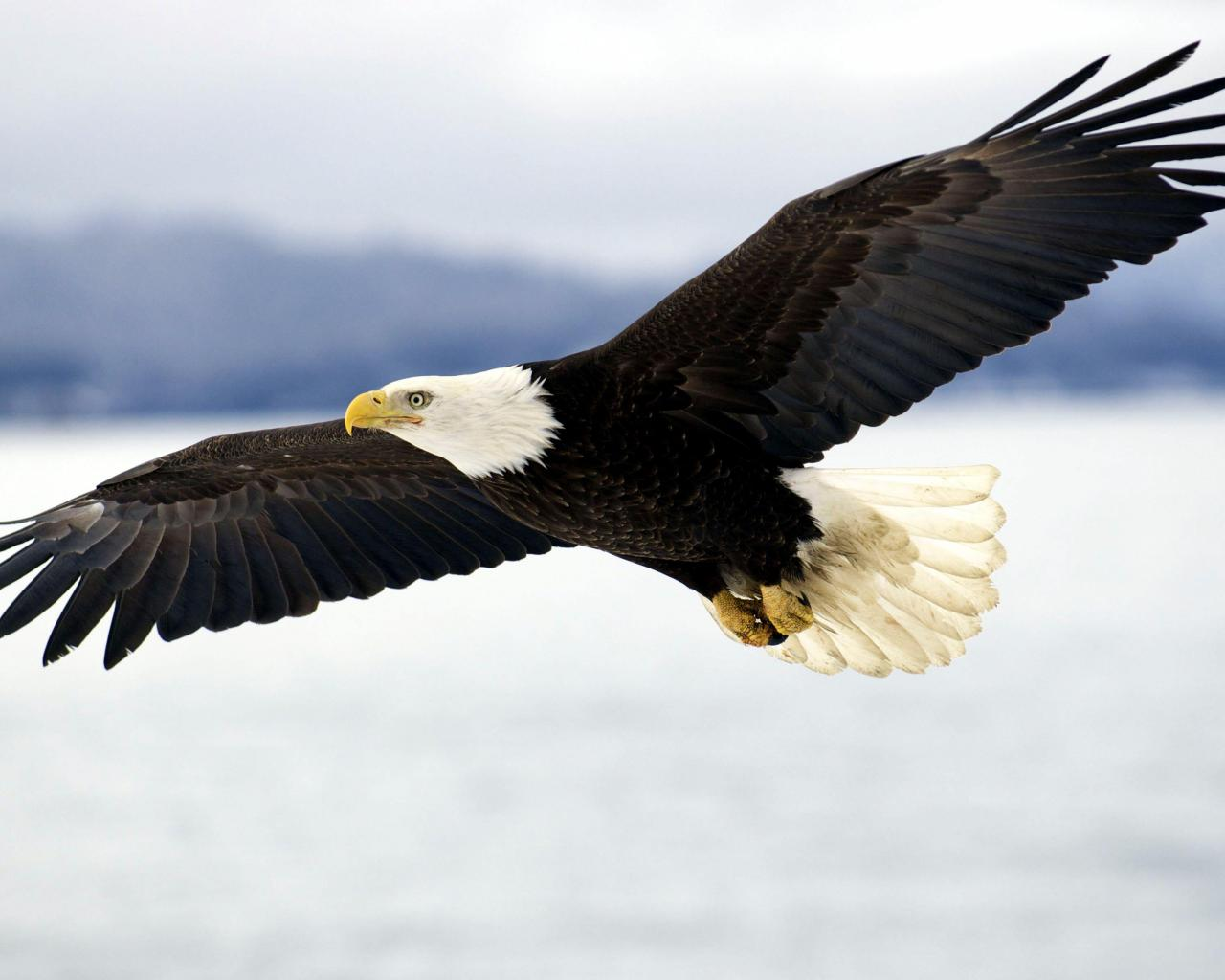 eagle 1280x1024 wallpaper - photo #17