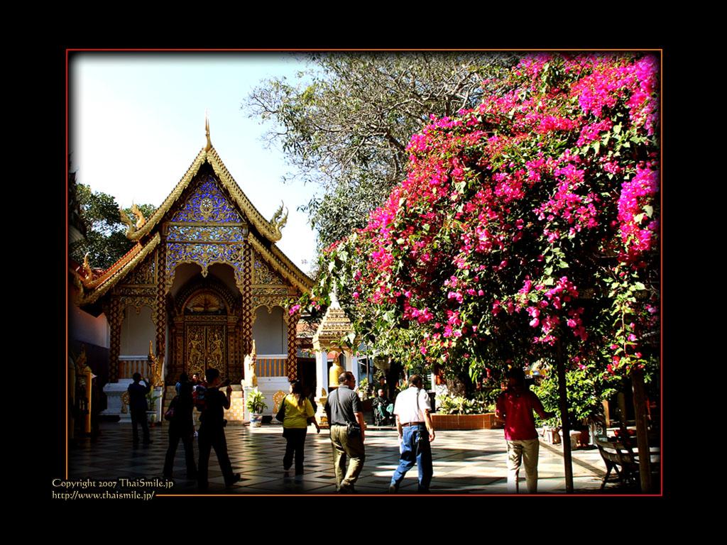 Chiangmai    Wallpapers 1024x768