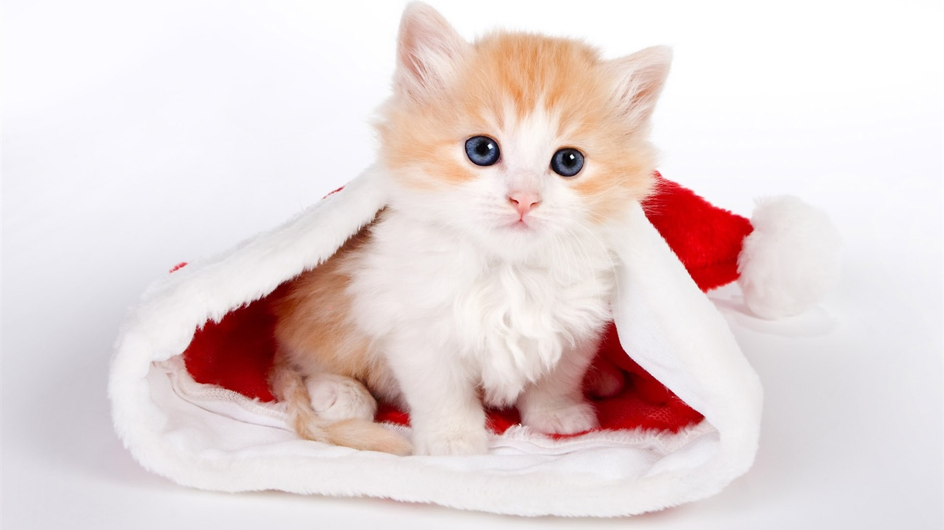 Cute Christmas Kittens 9832 Hd Wallpapers in Celebrations   Imagesci 1366x768