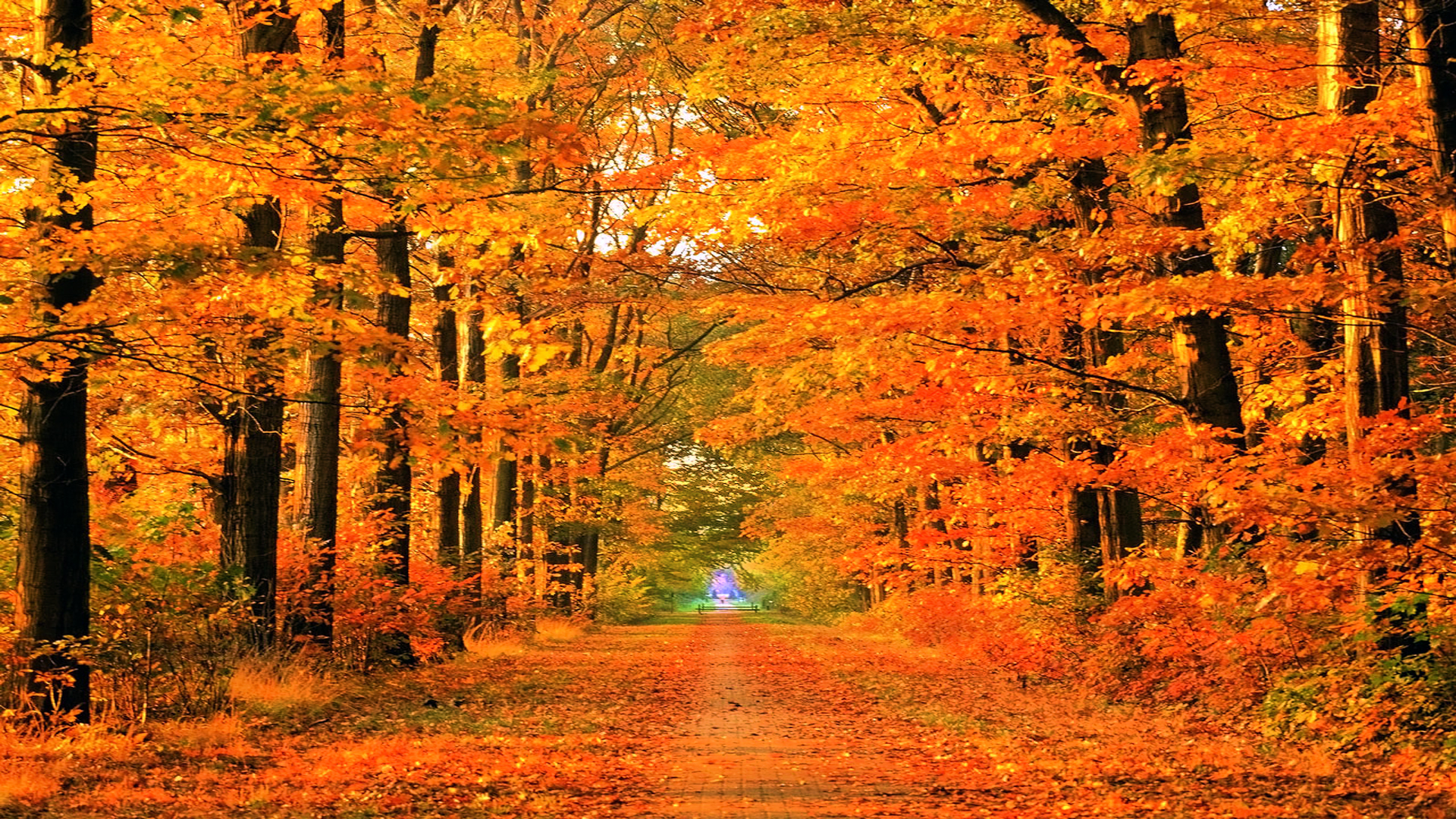 Autumn Roads Wallpaper 1920x1080 Autumn Roads Parks 1920x1080