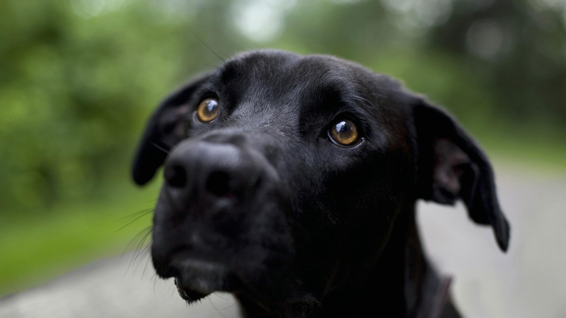 Black Dog   1920x1080   169 1920x1080
