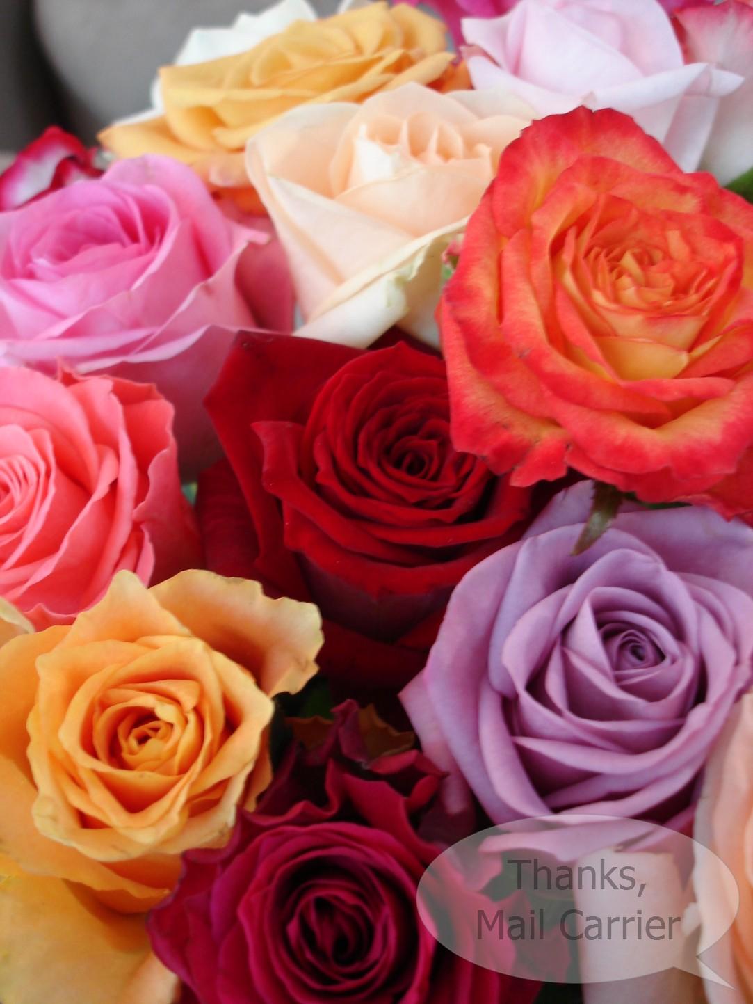 Color roses wallpaper hd wallpapersafari for 2 color roses