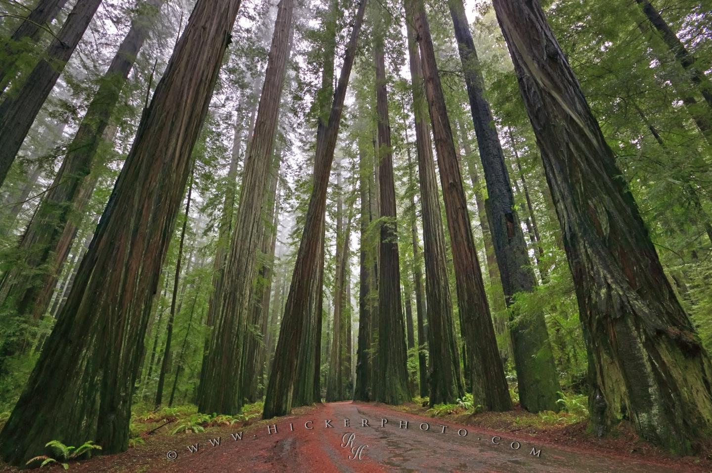 wallpaper background Redwood National Forest 1440x958