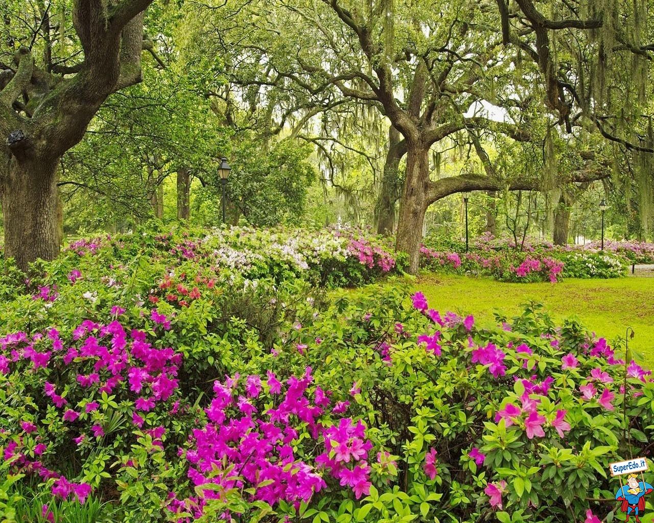 Sfondi Fiori Giardini Botanici 83 1280x1024