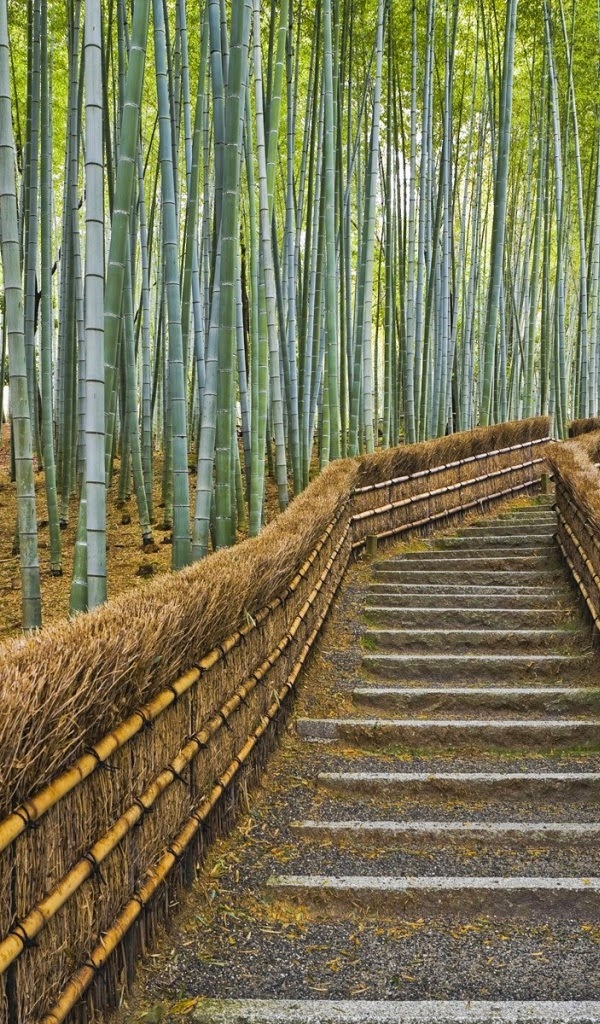 Download Tablet Wallpapers Amazon Kindle Fire Bamboo Forest Wallpapers 600x1024